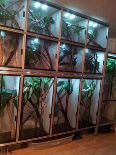 Beautiful herp wall set -up. Terrariums, Gecko Terrarium, Terrarium Reptile, Aquarium Terrarium, Chameleon Enclosure, Tortoise Enclosure, Reptile Enclosure, Reptile House, Reptile Room