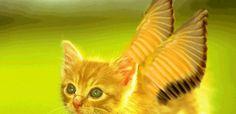 Uçan Kedi