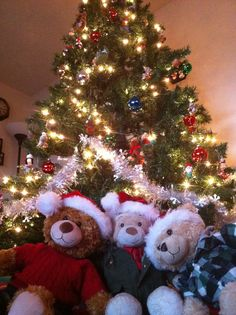 Once the Christmas tree is decorated, the bears work hard at guarding all the presents.