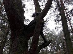 Mała wspinaczka po drzewie
