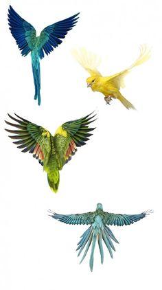 Birds by Andrew Zuckerman -adesivos para parede de altar