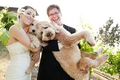 goldendoodle wedding! omg. I like them better in this pic because that one is MASSIVE and totally looks like an Airdale. They are growing on me I guess @Eric Duke