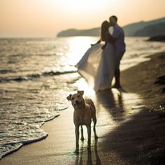 Book a Santorini photo shoot by Santorini photographer Alexander Hadji about the island & will make sure you will get the most out of your Santorini photo shoot! Santorini Photographer, Santorini Wedding, More Photos, Light In The Dark, Wedding Photos, Photoshoot, Bright Colours, Island, Animals