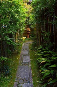 Tiny little stone path in a Kyoto garden