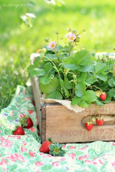 A crate ps strawberries.......    Photo by A Rosy Note