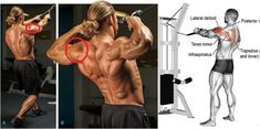 Only 4 Dumbbell Moves You Need For Defined 3D Shoulders. Learn the 4 best rear deltoid exercises to maximise your shoulder development and improve your posture at the same time. Although it can be performed using dumbbells, I would suggest going with the cable variation if possible since it places the rear deltoids under constant tension throughout the entire