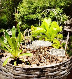 Vähän innostuin. Tein toisenkin  Nyt terassille istumaan salaatinlehden  ja viinisuolaheinän  alle. Basilikan voi napsaista suoraan suuhun. Rakensin #miniature #pienoispuutarha ystävälle jolla ei ole puutarhaa. Rakennusaineet Järvenpään Kukkatalosta @jkukkatalo #yrtit #ruukkupuutarha #kotipuutarha