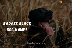 If you are roaming on the internet in search of names for a black dog, then here you can find male as well as female black dog names which are following the current trend of society. Black dogs are one of the most special breeds in the category of dogs, as they have very gorgeous fur. . #dog #dogs #frenchbulldog #doglovers #doglife #dogsofinsta #doggy#lovedogs #doglove #instadogs #cutedog #dogsofinstaworld #dogslife #happydog #cutedogs #blackdog #blackdogs Black Dog Names, Black Dogs, Black Men, Best Black, Cool Names, Happy Dogs, Dog Life, Cute Dogs, French Bulldog