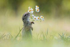花の香りを嗅ぐリス