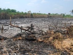 Cinco medidas para zerar o desmatamento no Brasil - Floresta queimada na Amazônia