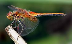 Dragonfly demonstrates the lengths women have to go to avoid cat-calls.