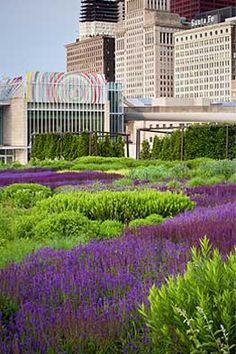 Piet Oudolf - Millenium Park in Chcago Plant Design, Garden Design, Landscape Architecture, Landscape Design, Meadow Sage, Dutch Gardens, Commercial Landscaping, California Native Plants, Blue Garden