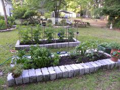 We planted a small garden this year and got allot of produce. I am hooked I would love to have a bigger garden.
