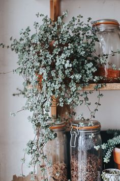 All Details You Need to Know About Home Decoration - Modern Cool Plants, Green Plants, Planting Succulents, Planting Flowers, Cacti Garden, Succulent Arrangements, Indoor Garden, Indoor Plants, Handmade Home Decor