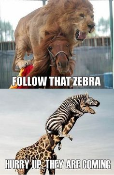 Animals chasing animals! Funny funny-photos