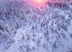 Winter forest on Behance Aerial Photography, Travel Photography, Stunning Photography, Phantom 4, Minimal Photo, Snowy Forest, Winter Sunset, Branding, Landscape Photos