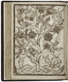 36v A stylised plant with leaves like sage and unusual composite flowers. This is the only drawing dated Juli 1604, fitting between the main part of the book done in the 1590s and the page fillers of 1622.