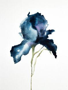 Iris No. 14