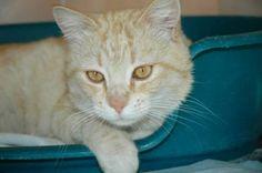 BAMBINO - Gato adoptado - AsoKa el grande