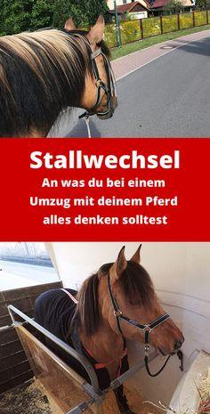 ✔︎ Umzug mit Pferd: Checkliste Stallwechsel ▶︎ An was du bei einem Umzug mit deinem Pferd alles denken solltest