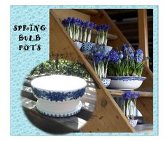 Just in time for Spring... Bulb Planter Pots in Blue & White on Etsy