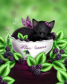 Blackberry Kitten