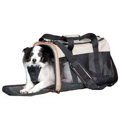 Kurgo Wander Pet Carrier *** Startling review available here  : Stuff for dog