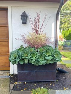 Dirt Simple | Gardening and Landscape Blog by Deborah Silver Outdoor Christmas Planters, Christmas Urns, Evergreen Landscape, Ornamental Cabbage, Fall Containers, Faux Grass, Garden Works, Large Plants, Potted Plants