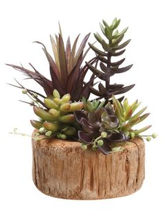 "Succulent Garden 8"" in Wood Container Burgundy Green"