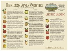 1000 Images About Heirloom Apples On Pinterest Apple Tree Apples And Apple Fruit