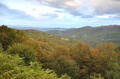 ariegenews.com - Vallée de la Barguillère: soirée brame du cerf en forêt domaniale du Consulat. Renseignements pour nos séjours #brameducerf 0561056790