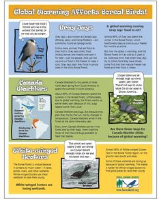 Tons of free activities relating to climate change and birds. Global Warming Climate Change, Free Activities, New Theme, The Rock, Environment, Birds, America, Education, Fun