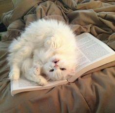 sweet white cat kitty ♥♥♥♥