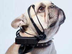 New Class Brainwave Reading devices translate dog barks human language. via http://www.wikitrend.org/new-class-brainwave-reading-devices-translate-dog-barks-human-language. | www?albertalagrup.com
