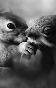 Squirrely kisses