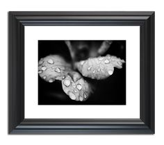 """Raindrops On Wild Rose""  Nature photography Wall Art Print by nature photographer Melissa Fague."