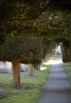 Yew tree by Britt Wi