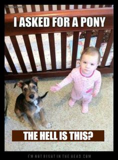 As the commercial says: apparently riding the dog like a pony is frowned upon in this establishment! Hahaha