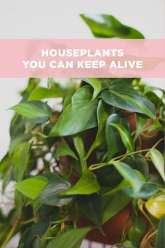 5 Houseplants You Can Actually Keep Alive