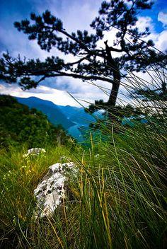 Tara Mountain, Western Serbia.