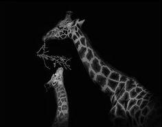 Animales en blanco y negro!