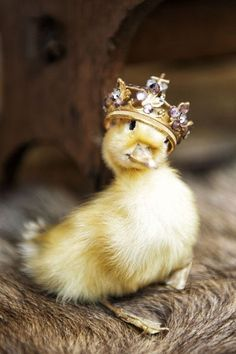 Little Duck with Crown