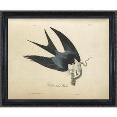 Swallow-tailed Hawk with La Scala Frame 16'X20'