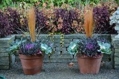 Fall Planters with Kale by Deborah Silver Fall Planters with Kale by Deborah Silver Flowering Kale, Container Plants, Planting Bulbs, Planters, Autumn Garden, Plants, Fall Planters, Container Gardening Vegetables, Fall Plants