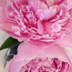 @ggifford3 Fresh cut Peonies - my office smells wonderfully sweetMakes working inside on such a beautiful day in #newhampshire brighter! Cheers to all of you working from home today too!