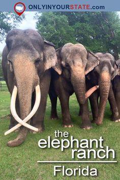 Travel | Florida | USA | Elephant Ranch | Elephants | Exotic Animals | Places To Visit | Amazing Places | Bucket List