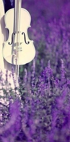 a lavender-field concert? yes, please!