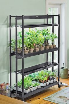 Indoor, Indoor Grow Lights: Optimizing Your Plant Growth With Indoor Grow Lights
