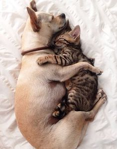 See... Dogs and Cats CAN be friends :) www.RadioFence.com Pet Products