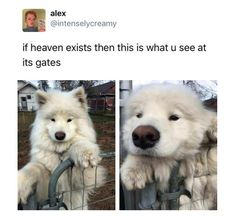 cool Animal Memes That Will Make Your Break Awesome ( 50+ Pictures)